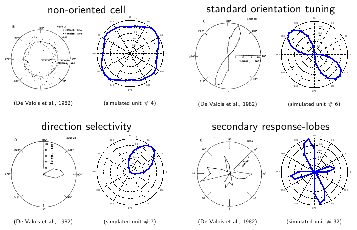 orientation